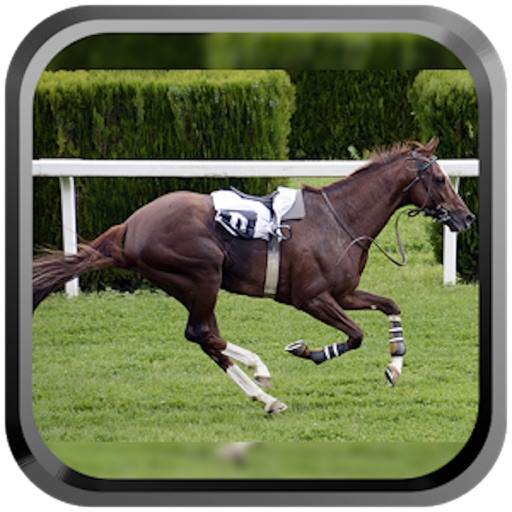 Derby Quest:Horse Breed-ing and Racing Champion HD