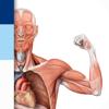 PROMETHEUS - LernKarten der Anatomie