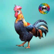 Activities of Rooster Simulator