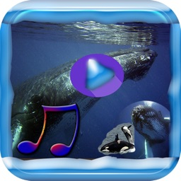 Relaxing Whale Music