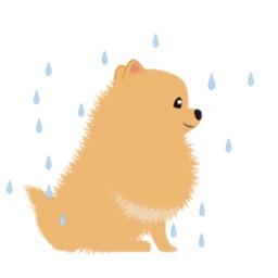 Pomeranian Dog - Pommoji  Moji & Sticker