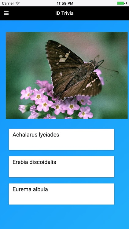 Butterfly Species of North America screenshot-3