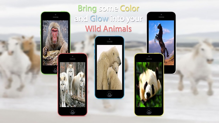 Wild Animals HD Wallpapers screenshot-3