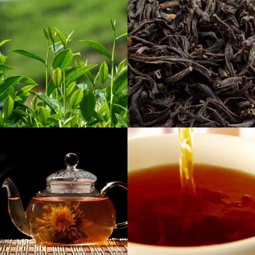 Чайный Гид (Tea Guide)