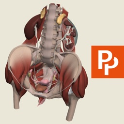 Female Pelvis: 3D Real-time Human Anatomy