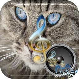 Best Cat Sounds +A