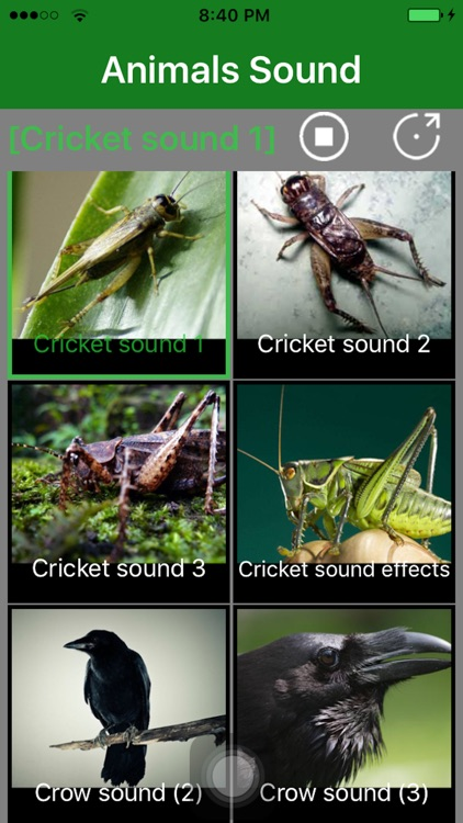 animalsinsects download free sound effects