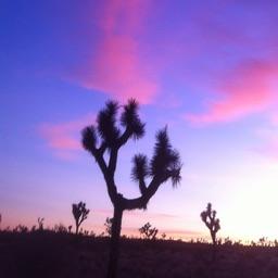 Desert Healing Meditation