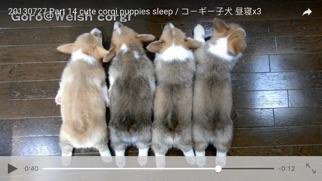 CatDogTube 〜子猫と子犬のかわいい動画〜紹介画像4