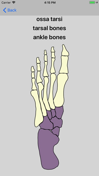 Bones of the body screenshot-4