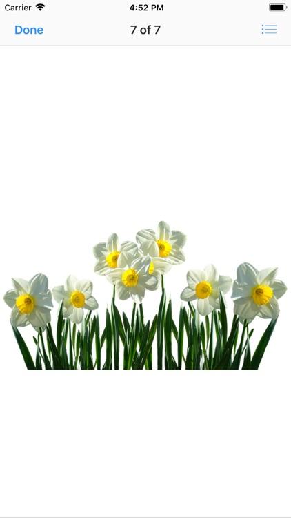 Daffodil Sticker Pack screenshot-7