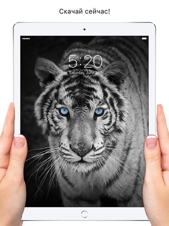 Everpix - Красивые HD обои Скриншоты11