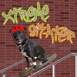 X Treme Skate Skateboarder Picture Editor
