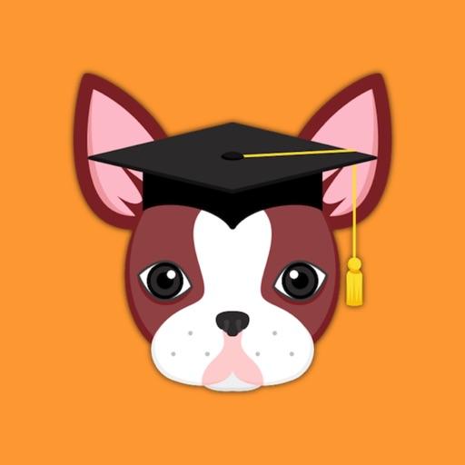 Red Boston Terrier