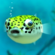 Activities of Playing with Puffer fish