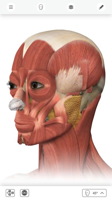 Interactive Anatomy - UK & IRE screenshot three