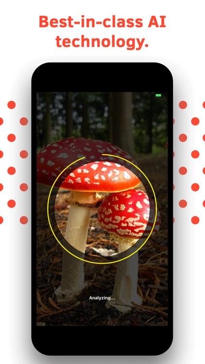 Mushroom Identification screenshot-3