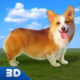 Corgi Stray Dog Simulator