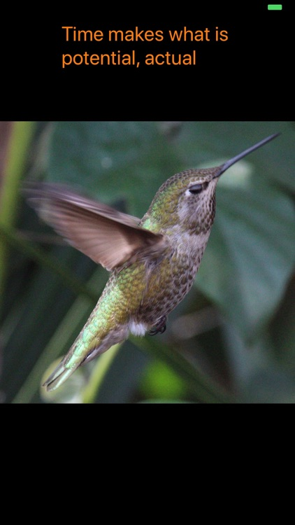 Hummingbird Moments screenshot-3