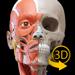 肌肉 | 骨骼 - 人体解剖学3D互动图集