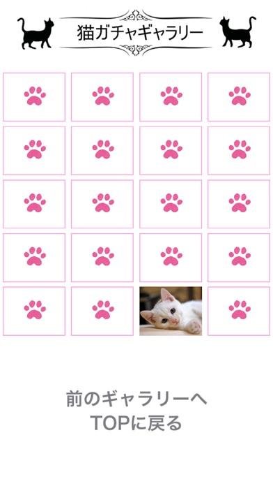 猫天気〜天気予報&可愛い猫写真〜紹介画像2