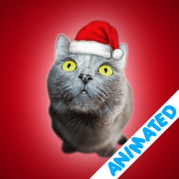 Cute Christmas Cats (animated)