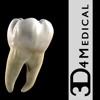 Dental Patient Education - 3D4Medical.com, LLC