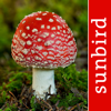 Mushroom Id North America