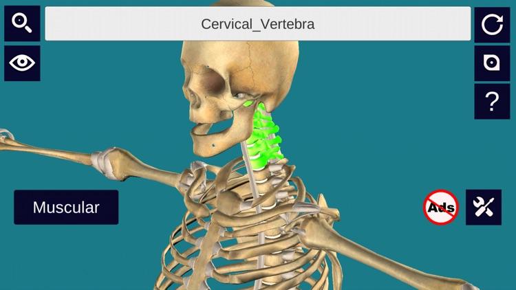 3D Anatomy + screenshot-4