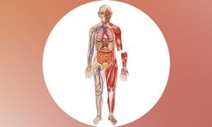 Human Body Guide!