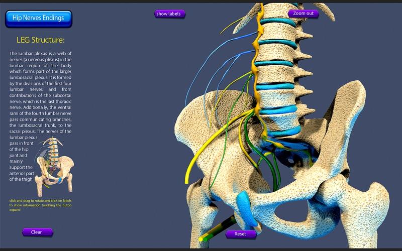 Hip Nerves Ending скриншот программы 3