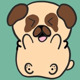 Boomer The Pug
