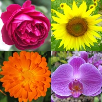 Codes for Flowers Quiz: Beautiful Plants Hack
