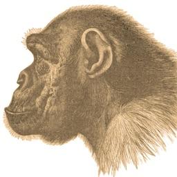 Ape Test