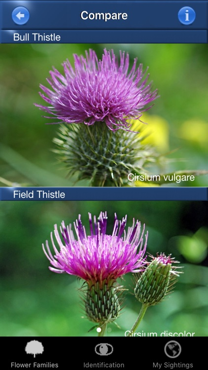 Wildflower Id USA Photo Recognition Guide NE screenshot-4