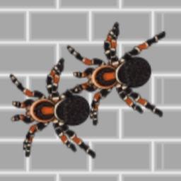巨大的变异蜘蛛- 经典休闲单机游戏