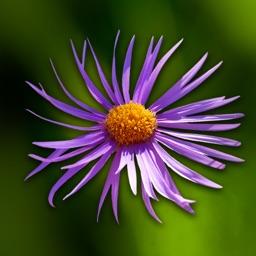 Wild-flowers