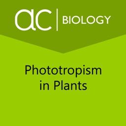 Phototropism in Plants