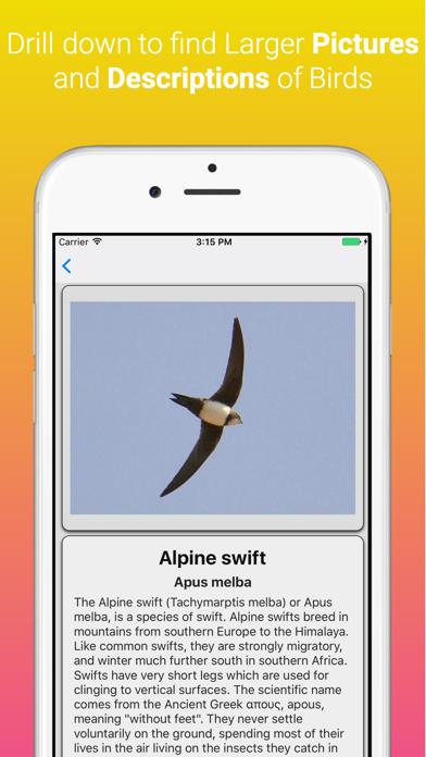 UK Birds Dictionary Pro screenshot two