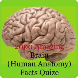 Human Brain Facts & Quiz 2000