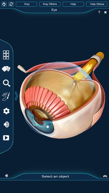 My Eye Anatomy