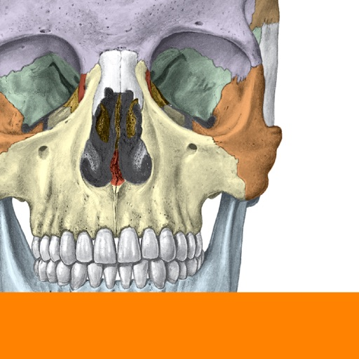 Sobotta Anatomy By Elsevier Gmbh