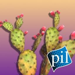 PI VR Wildlife