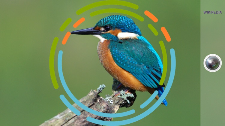 BirdSnap - Bird Identification