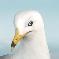 Codes for Jonathan Livingston Seagull 1 Hack