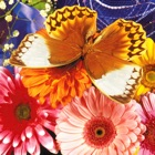 Butterfly Jigsaw icon