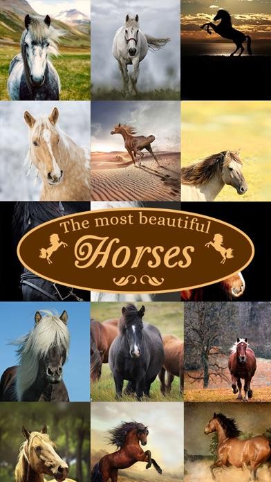 Horses - Wallpapers + Add Text screenshot 1