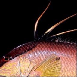 FishySkins - Fish Wallpaper