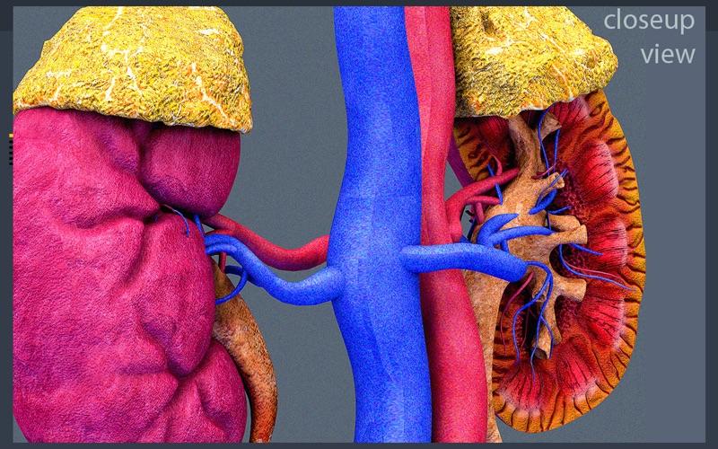 Kidney Motion скриншот программы 2