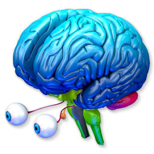 Brain Parts 3D
